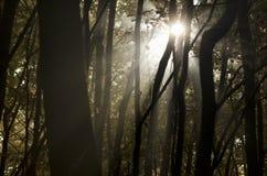 Sol a través de árboles Imagen de archivo libre de regalías