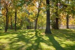 Sol a través de árboles en parque de la ciudad fotografía de archivo libre de regalías