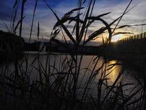 Sol a través de la hierba Fotografía de archivo