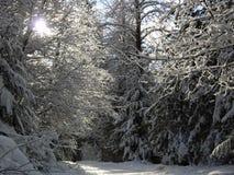 Sol a través de ramificaciones nevosas en un camino i del invierno Fotografía de archivo libre de regalías