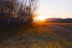 Sol a través del bosque Foto de archivo libre de regalías