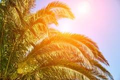 Sol tropical que brilla a través de las palmeras fotografía de archivo
