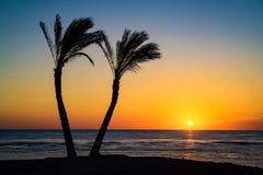 Sol under palmträd Arkivbild