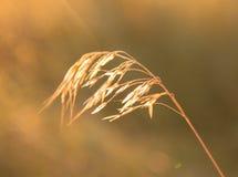 Sol- växt Royaltyfria Bilder