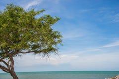 Sol verde del arena de mar Fotos de archivo