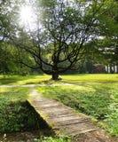 Sol y árbol Fotografía de archivo