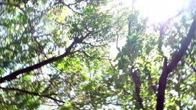 Sol y árbol del arbolado metrajes
