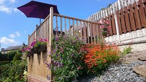 Sol y flores inglesas del verano foto de archivo libre de regalías