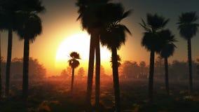 Sol y palmas que brillan intensamente de la niebla ilustración del vector