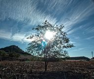 Sun and shadow under a tree Stock Image