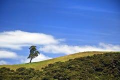Sola colina del árbol y del balanceo Foto de archivo libre de regalías