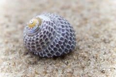 Sola concha marina Imagen de archivo libre de regalías