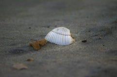 Sola concha marina en las arenas Fotografía de archivo