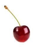 Sola dulce-cereza rojo oscuro Fotografía de archivo libre de regalías