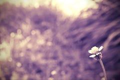 SOLA FLOR Fotografía de archivo libre de regalías