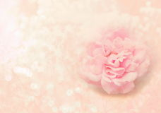 Sola flor de la rosa del rosa en el fondo rosado suave para la tarjeta del día de San Valentín o Foto de archivo libre de regalías