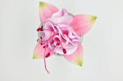 Sola flor del rosa fucsia en un fondo blanco Imagenes de archivo