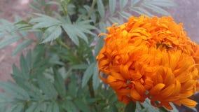 Sola flor en color pose?do imágenes de archivo libres de regalías