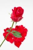 Sola forma del corazón de la rosa del rojo en el fondo blanco Foto de archivo libre de regalías