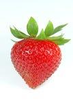 Sola fresa - imagen de Stoc fotografía de archivo libre de regalías