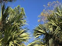 sola fronda de la palma Imagen de archivo