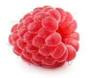 Sola fruta de la frambuesa roja aislada en blanco Imagen de archivo libre de regalías