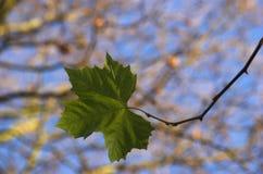 Sola hoja Foto de archivo libre de regalías