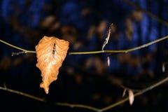 Sola hoja coloreada otoñal en la noche foto de archivo