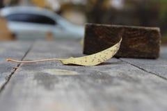 Sola hoja del otoño Fotografía de archivo