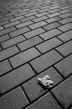 Sola hoja en el pavimento Imagen de archivo libre de regalías