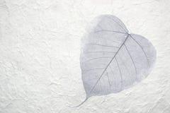Sola hoja en papel Imagen de archivo libre de regalías