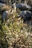 Sola lámina de la hierba imagen de archivo