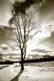 Sola manera del árbol y del mecanismo impulsor Fotografía de archivo