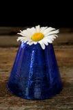 Sola margarita Foto de archivo libre de regalías