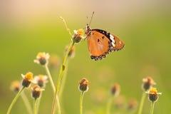 Sola mariposa Fotos de archivo