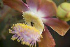 Sola miel de la apicultura de las flores, con cerrado-para arriba, y el beautif Imagen de archivo libre de regalías
