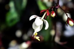 Sola orquídea blanca en fondo borroso Imagenes de archivo