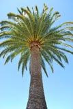 Sola palmera Fotografía de archivo