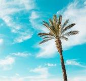 Sola palmera contra el cielo azul claro de la turquesa imagen de archivo