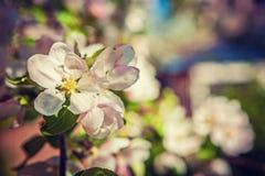 Sola pequeña rama con las flores florales imagen de archivo libre de regalías