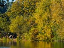 Sola pesca del hombre en un lago en el tiempo de caída del otoño Foto de archivo