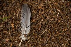 Sola pluma en el piso del bosque Imágenes de archivo libres de regalías