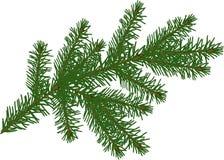 Sola rama verde del abeto aislada en blanco foto de archivo