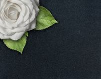 Sola rosa blanca con las hojas verdes en esquina del fondo texturizado oscuro con el espacio de la copia fotografía de archivo
