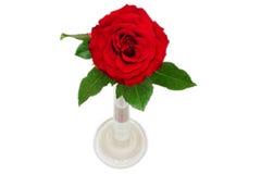 Sola rosa del rojo en florero Fotografía de archivo libre de regalías