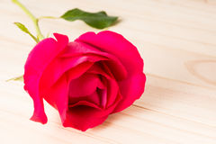 Sola Rose Foto de archivo