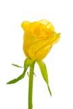 Sola Rose amarilla imagenes de archivo
