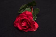 Sola Rose roja Imagen de archivo