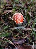 Sola seta roja Imagen de archivo