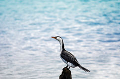 Solace. A lonely bird out on the water Royalty Free Stock Photos